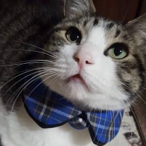 猫神戸タータン
